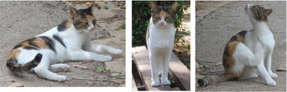 -cat-with-different-conformations