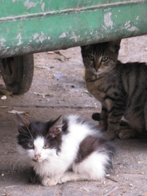 cats-hiding-under-dumpster