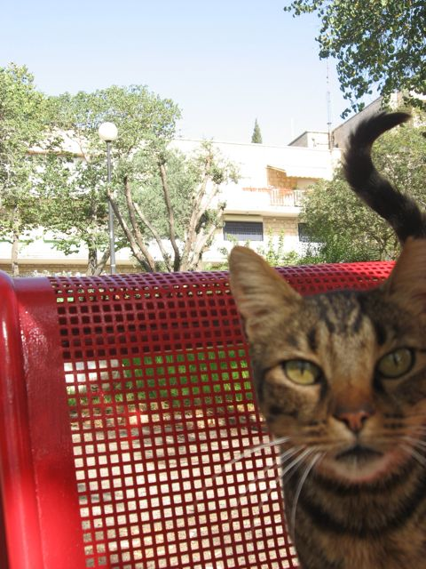 jerusalem-dumpster-cat.