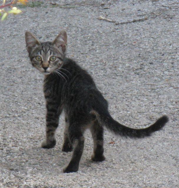 -a-jerusalem-dumpster-kitten-super-cute