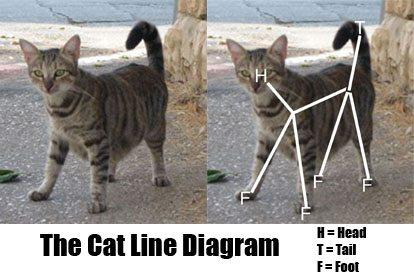 the-cat-line-diagram