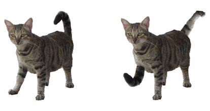 constitutional-isocats-switched-tail-and-foot
