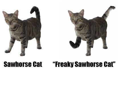 freaky-sawhorse-cat-has-a-foot-interchanged-with-a-tail-cat-line-diagram