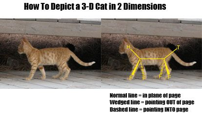 depicting-a-3d-cat-in-two-dimensions-from-the-side