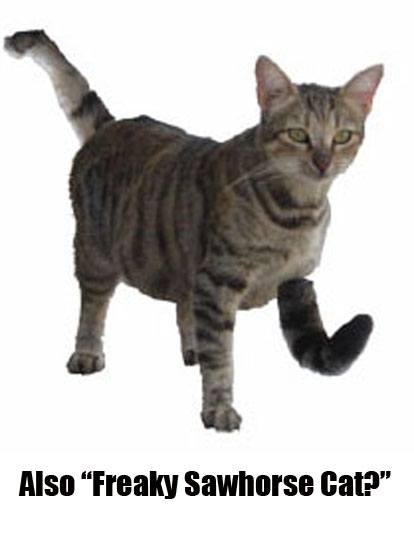 enantiomer-of-freaky-sawhorse-cat-is-this-the-same-cat-or-not