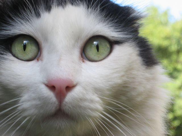 jerusalem-cat-up-close