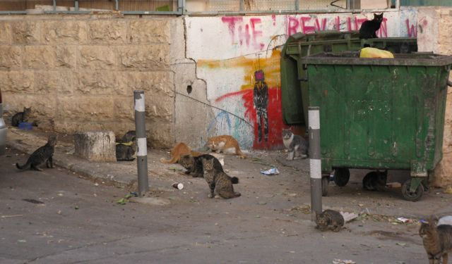 jerusalem-cats-hanging-out-at-a-dumpster
