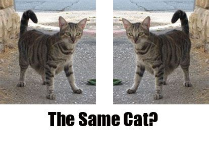 cat-line-diagram-for-two-identical-cats-superimposable-mirror-images