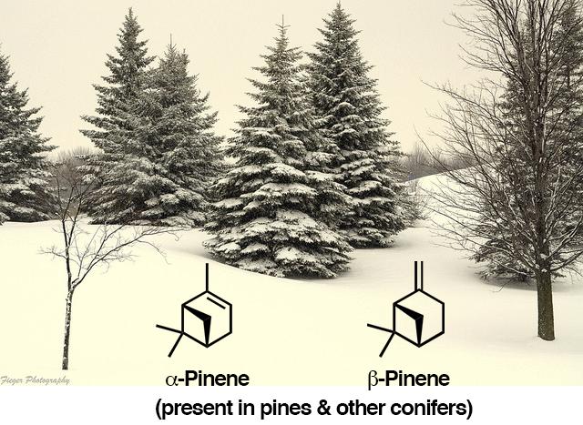 10-pine