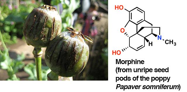 opium picture of morphine molecule