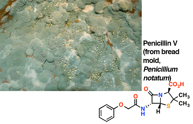 penicillin V structure with picture of mold
