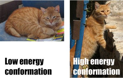 cat-showing-low-energy-conformation-and-high-energy-conformation
