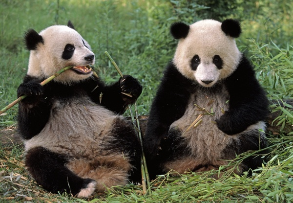 pandas are hard to induce to have sex jjust like ethers are reluctant to react with functional groups