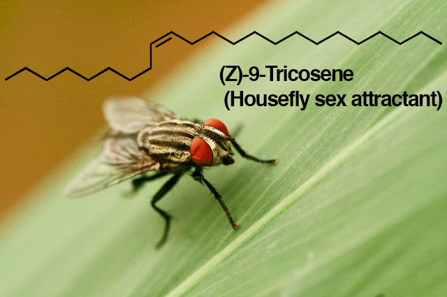 -tricosene housefly sex attractant