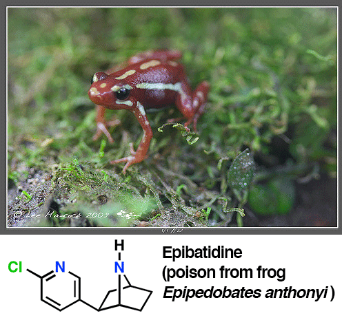epibatidine from poison dart frog