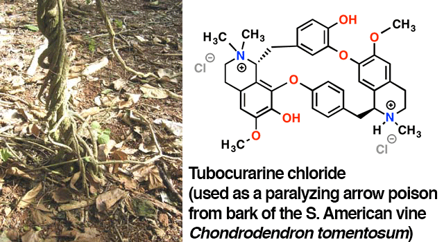 tubocurarine chloride from curare vine